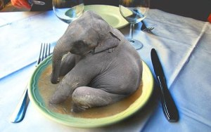 I want a tiny pet elephant!